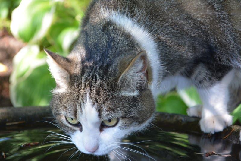 Κατανάλωση γατών στοκ εικόνα