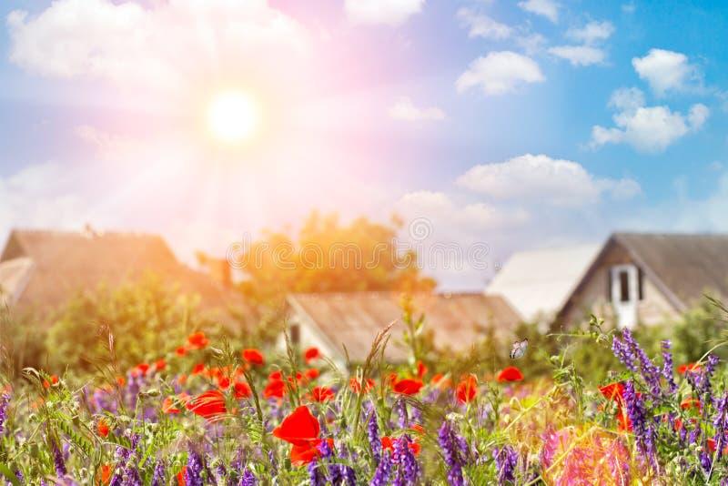Καταπληκτική άποψη τοπίου τομέων θερινών του όμορφου φωτεινού κόκκινου μεγάλου παπαρουνών στη Γερμανία, τα ζωηρόχρωμα σπίτια, τα  στοκ φωτογραφία με δικαίωμα ελεύθερης χρήσης