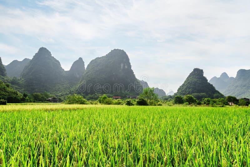 Καταπληκτική άποψη του πράσινου τομέα ρυζιού και των φυσικών βουνών καρστ στοκ φωτογραφίες με δικαίωμα ελεύθερης χρήσης