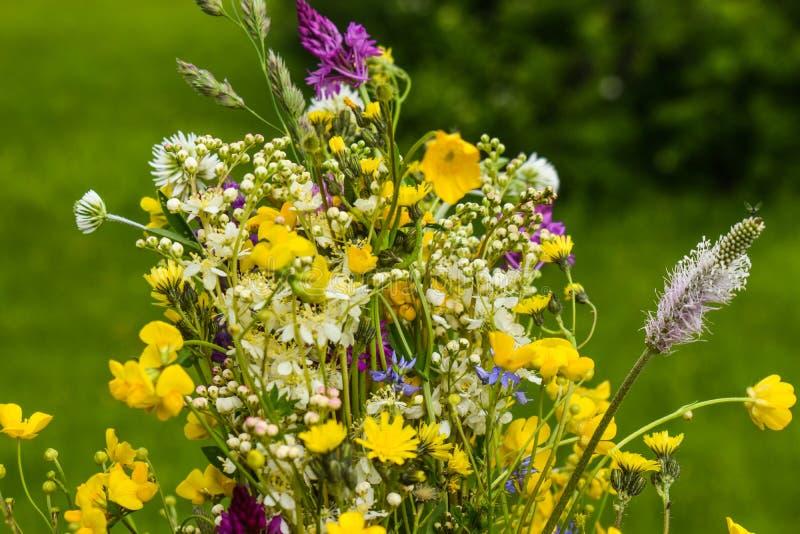 Καταπληκτική ανθοδέσμη των πολύχρωμων άγριων λουλουδιών με το φρέσκο πράσινο υπόβαθρο στοκ φωτογραφία με δικαίωμα ελεύθερης χρήσης