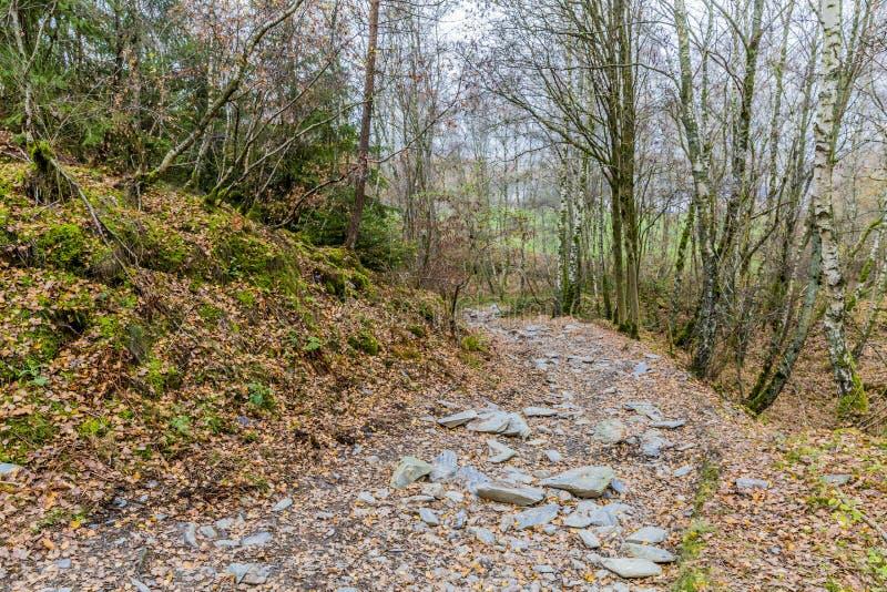 Καταπληκτική εικόνα ενός βρώμικου δρόμου με τις πολλές και τις μεγάλες χαλαρές πέτρες στη μέση του δάσους στοκ εικόνα