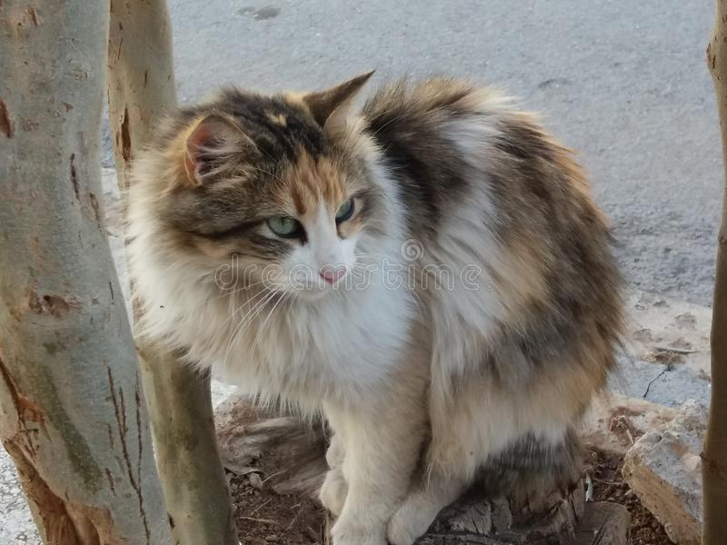 Καταπληκτική εικόνα κατοικίδιων ζώων γατών στοκ εικόνα με δικαίωμα ελεύθερης χρήσης