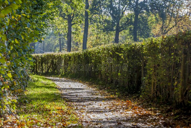 Καταπληκτική εικόνα μιας πορείας ασφάλτου με τα ξηρά φύλλα στοκ εικόνες