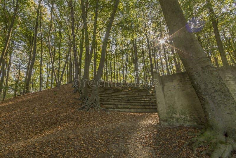 Καταπληκτική εικόνα της σκάλας ενός αρχαίου αμφιθεάτρου υπαίθρια στη μέση του δάσους στοκ εικόνες με δικαίωμα ελεύθερης χρήσης