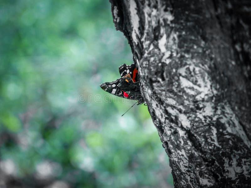 Καταπληκτική πεταλούδα στοκ εικόνες με δικαίωμα ελεύθερης χρήσης