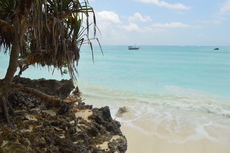 Καταπληκτική φωτογραφία του φοίνικα και της ζαλίζοντας μπλε θάλασσας στοκ εικόνες