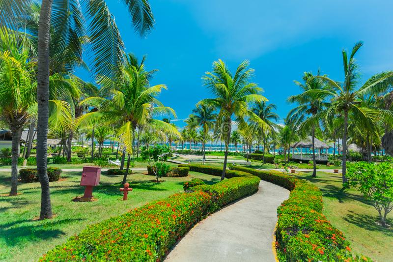 Καταπληκτικοί λόγοι ξενοδοχείων με τον τροπικό κήπο που οδηγεί στην παραλία και τον ωκεανό την ηλιόλουστη συμπαθητική ημέρα στοκ φωτογραφία με δικαίωμα ελεύθερης χρήσης