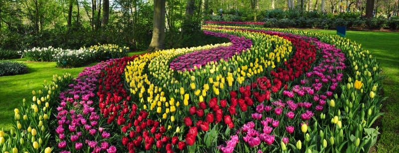 Καταπληκτικό διακοσμητικό κρεβάτι λουλουδιών στους κήπους Κάτω Χώρες keukenhof στοκ εικόνες με δικαίωμα ελεύθερης χρήσης