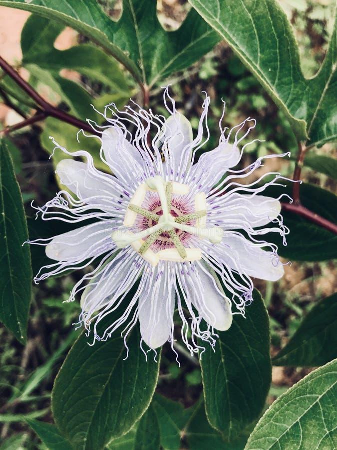 Καταπληκτικό λουλούδι στοκ φωτογραφίες