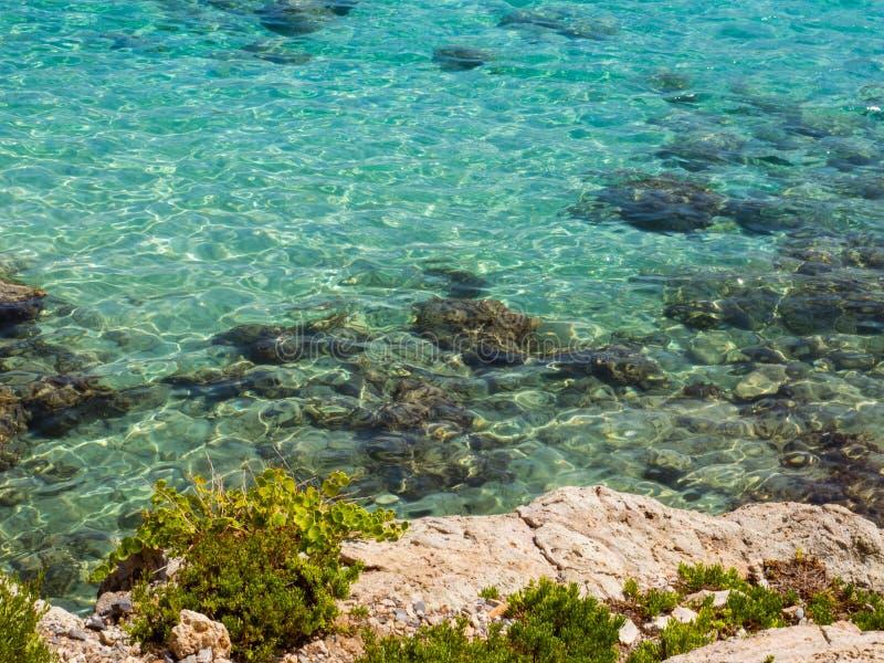Καταπληκτικό μπλε κρύσταλλο - καθαρίστε το νερό - φρέσκες πράσινες εγκαταστάσεις στην ακτή βράχου στοκ εικόνα με δικαίωμα ελεύθερης χρήσης