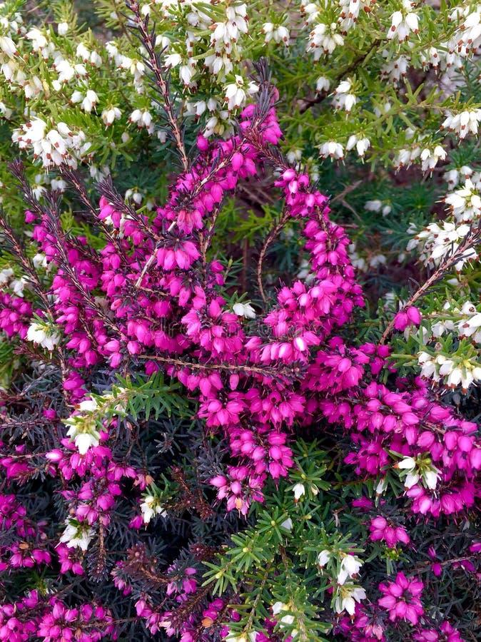 καταπληκτικό φυτό στοκ φωτογραφίες με δικαίωμα ελεύθερης χρήσης