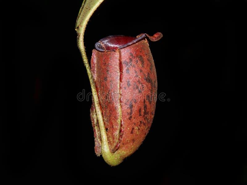 καταπληκτικό φυτό στοκ εικόνες με δικαίωμα ελεύθερης χρήσης