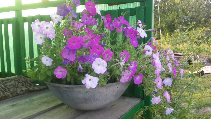 καταπληκτικά λουλούδι&al στοκ φωτογραφίες