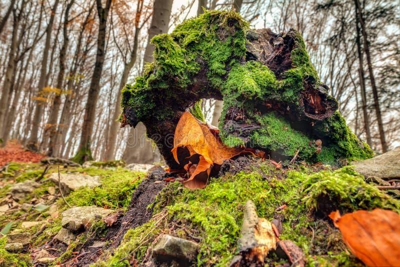 Καταπληκτική πτώση Forrest στοκ εικόνα με δικαίωμα ελεύθερης χρήσης