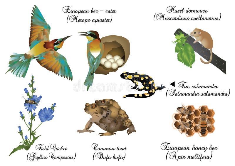 Καταπληκτική φύση καθορισμένη - ευρωπαϊκά ζώα ελεύθερη απεικόνιση δικαιώματος