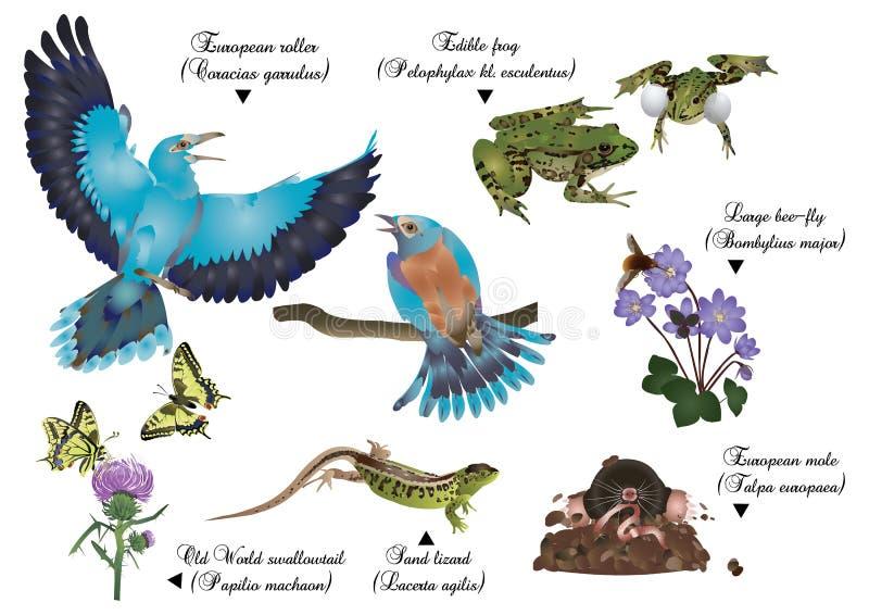 Καταπληκτική φύση καθορισμένη - ευρωπαϊκά ζώα διανυσματική απεικόνιση