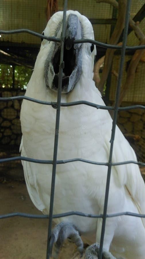 Καταπληκτικός άσπρος παπαγάλος στοκ εικόνες