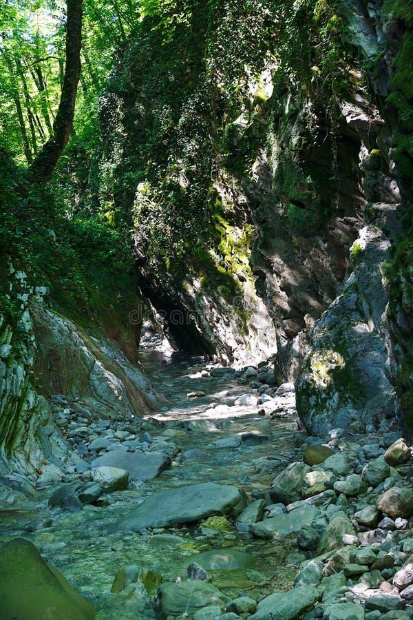 Καταπληκτικό φαράγγι βουνών με έναν κολπίσκο στο νότιο δάσος στοκ φωτογραφία με δικαίωμα ελεύθερης χρήσης