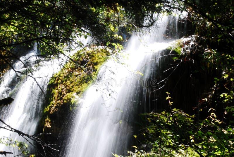 Καταρράκτες στα δάση στοκ φωτογραφία με δικαίωμα ελεύθερης χρήσης