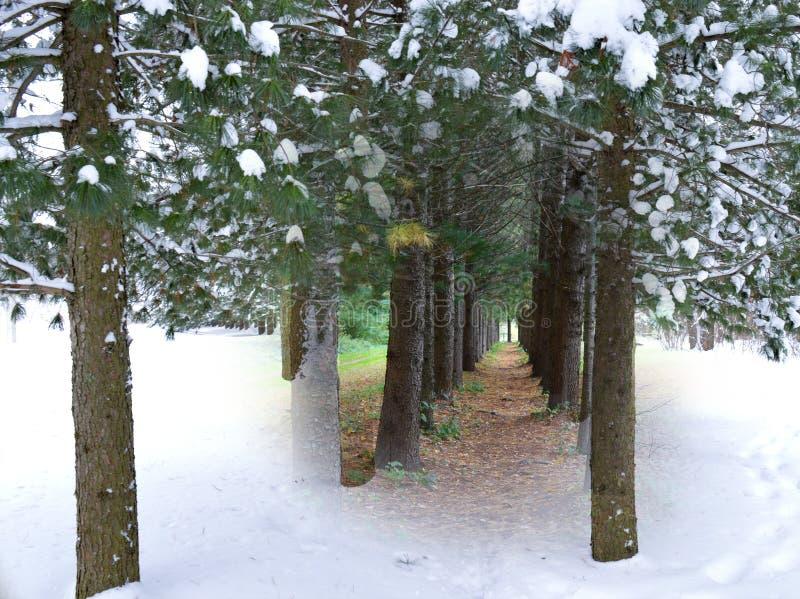 Καταρράκτης, νερό, φύση, δάσος, τοπίο, δέντρο, πάρκο, πράσινο, ποταμός, πτώση, φθινόπωρο, ρεύμα, δέντρα, καταρράκτης, πτώσεις, δρ στοκ φωτογραφία