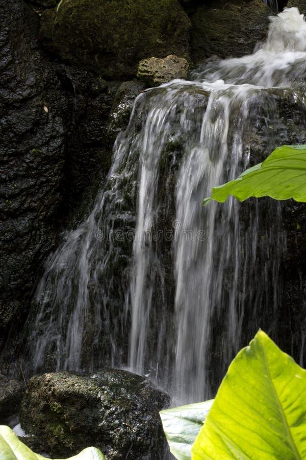 Καταρράκτης πέρα από τους Mossy βράχους με τα πράσινα φύλλα στον τροπικό Boranic κήπο θλφαηρθχηλδ στη νότια Φλώριδα στοκ εικόνες με δικαίωμα ελεύθερης χρήσης