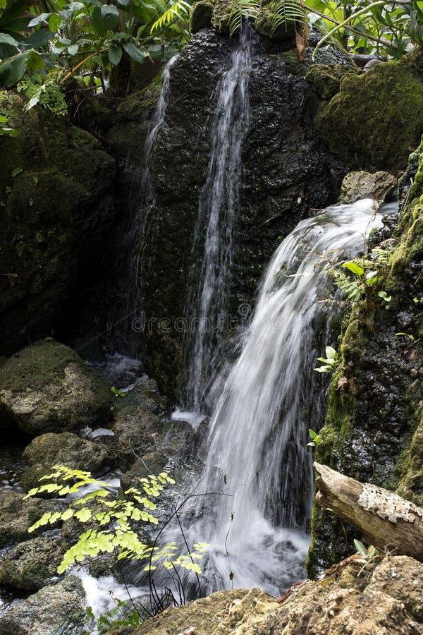 Καταρράκτης πέρα από τους Mossy βράχους με τις φτέρες και πρασινάδα στον τροπικό Boranic κήπο θλφαηρθχηλδ στη νότια Φλώριδα στοκ εικόνα