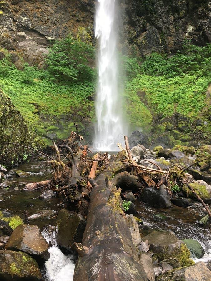 Καταρράκτης πέρα από το πεσμένο δέντρο στοκ φωτογραφία με δικαίωμα ελεύθερης χρήσης