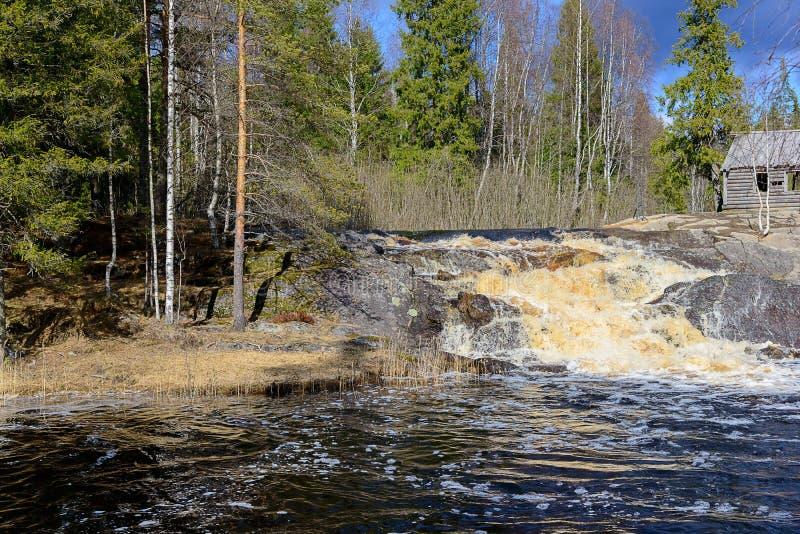 Καταρράκτης στο κωνοφόρο δάσος, Καρελία, Ρωσία στοκ φωτογραφία με δικαίωμα ελεύθερης χρήσης