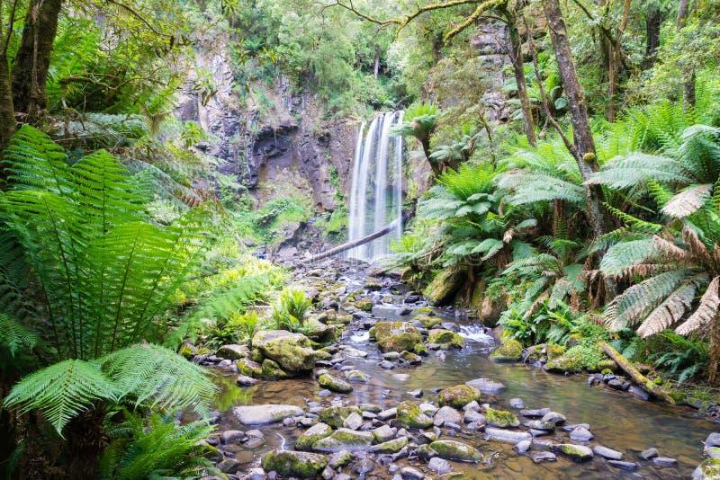 Καταρράκτης στο μεγάλο εθνικό πάρκο Otway σε Βικτώρια, Αυστραλία στοκ φωτογραφίες