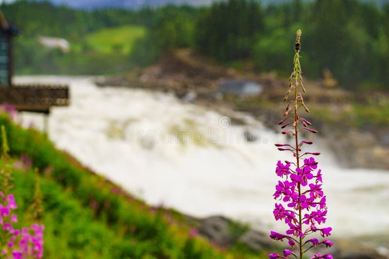 Καταρράκτης Formofossen, ισχυρός ποταμός στη Νορβηγία στοκ εικόνα με δικαίωμα ελεύθερης χρήσης