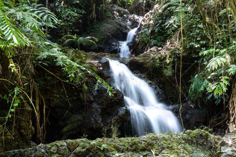 Καταρράκτης Onomea, της Χαβάης τροπικός βοτανικός κήπος, Hili, Χαβάη Από το τροπικούς δάσος, τη λίμνη και τους βράχους κατωτέρω στοκ εικόνες με δικαίωμα ελεύθερης χρήσης