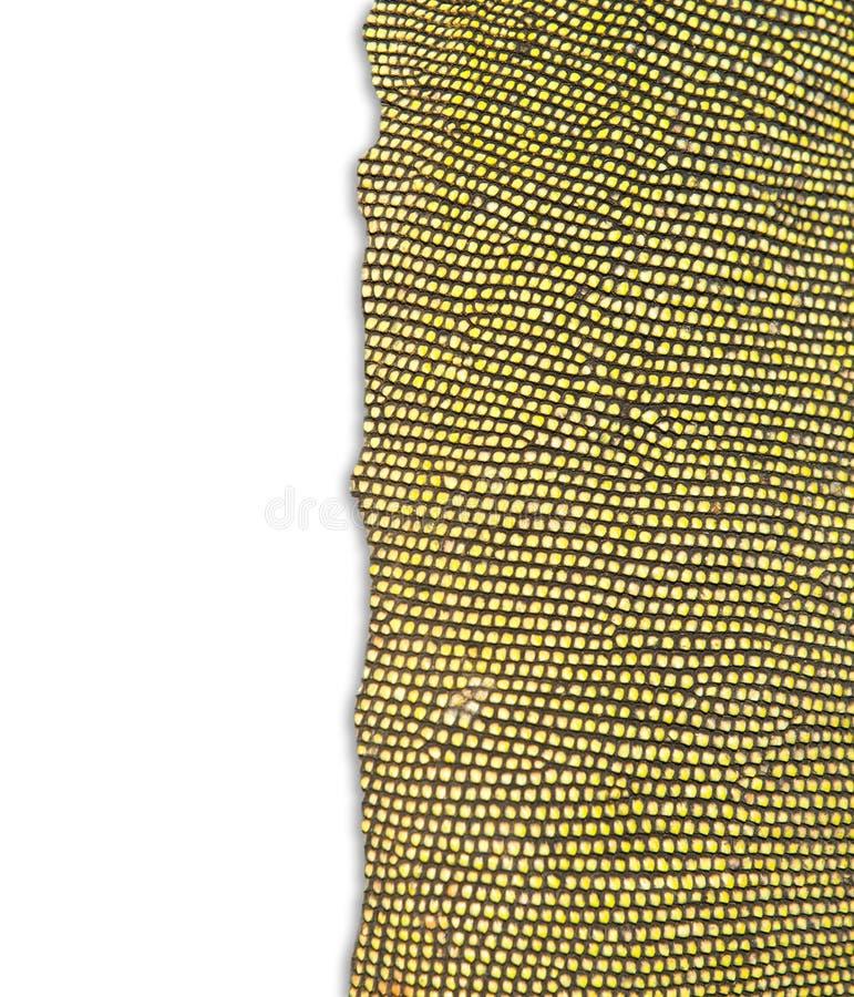 Κατασκευασμένος του δέρματος iguana στοκ φωτογραφία