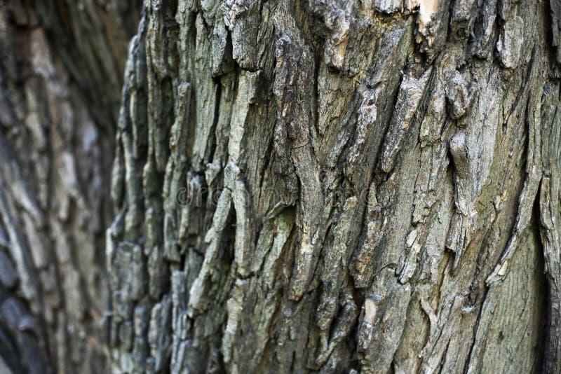 Κατασκευασμένος φλοιός δέντρων για ένα υπόβαθρο Ξύλο, φυσικός, βιομηχανικό στοκ εικόνες με δικαίωμα ελεύθερης χρήσης