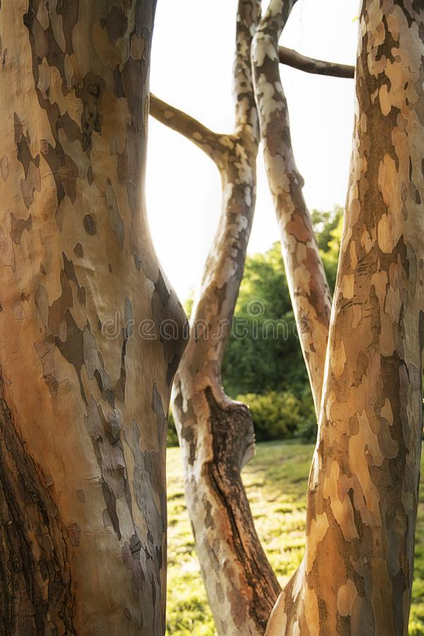 Κατασκευασμένος φλοιός δέντρων στο Highland Park Ρότσεστερ Νέα Υόρκη στοκ εικόνες με δικαίωμα ελεύθερης χρήσης