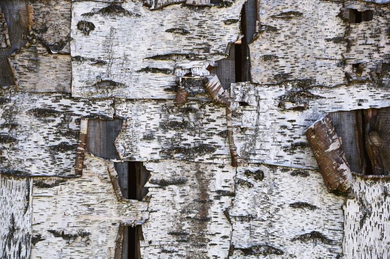 Κατασκευασμένος φλοιός υποβάθρου ενός δέντρου σημύδων στοκ εικόνες