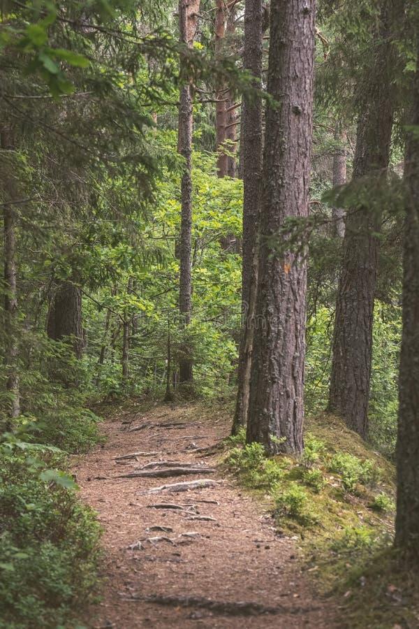 κατασκευασμένο σχέδιο υποβάθρου κορμών δέντρων - εκλεκτής ποιότητας αναδρομικός κοιτάζει στοκ εικόνα