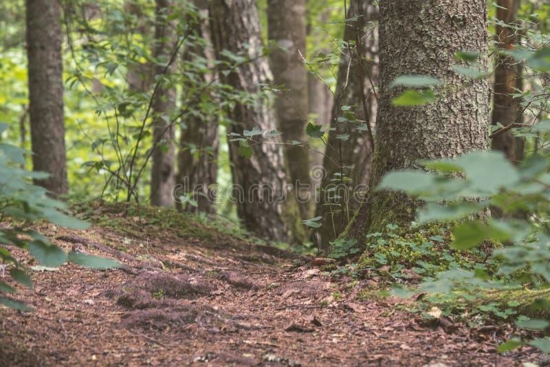 κατασκευασμένο σχέδιο υποβάθρου κορμών δέντρων - εκλεκτής ποιότητας αναδρομικός κοιτάζει στοκ εικόνα με δικαίωμα ελεύθερης χρήσης