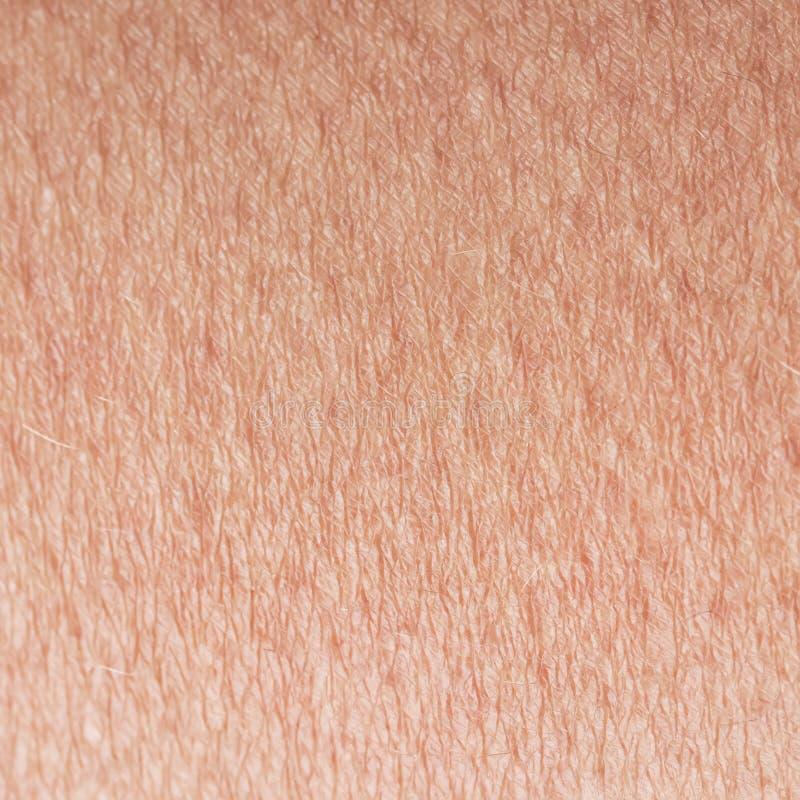Κατασκευασμένο υπόβαθρο Cosmetological το ρόδινο υγιές δέρμα της κινηματογράφησης σε πρώτο πλάνο αιώνα σωμάτων brow, που καλύπτετ στοκ εικόνες