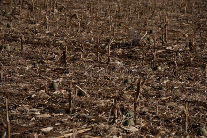 Καταστρεπτική ξηρασία στην Αφρική με τον άγονο τομέα στοκ φωτογραφία με δικαίωμα ελεύθερης χρήσης
