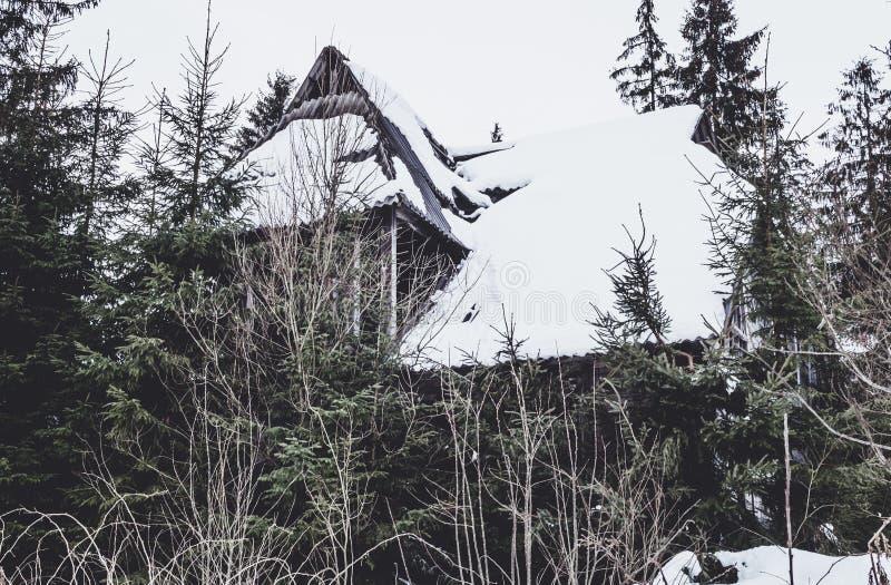 Καταστροφές ενός παλαιού ξύλινου σπιτιού στο δάσος στοκ εικόνες