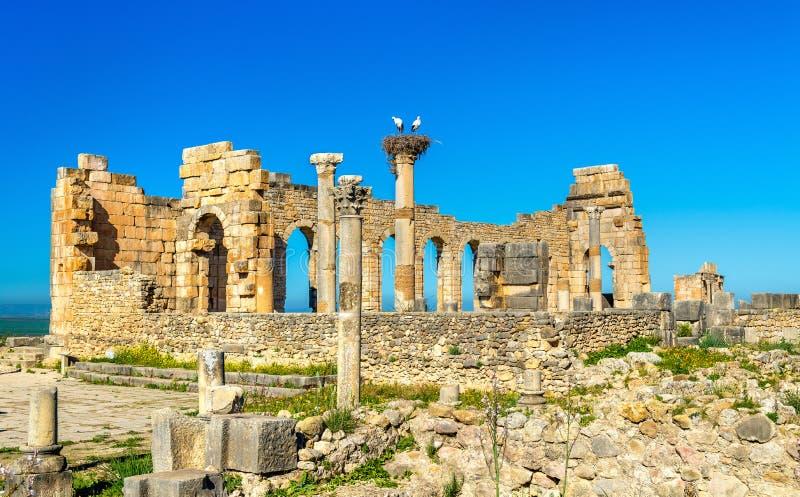 Καταστροφές μιας ρωμαϊκής βασιλικής σε Volubilis, Μαρόκο στοκ εικόνα με δικαίωμα ελεύθερης χρήσης