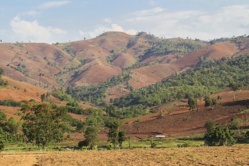 Καταστροφή τροπικών δασών στοκ εικόνες