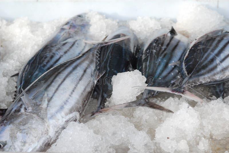 κατεψυγμένα ψάρια στοκ εικόνα με δικαίωμα ελεύθερης χρήσης