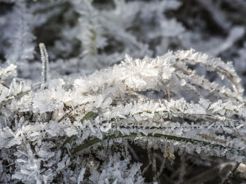 Κατεψυγμένο γρασίδι καλυμμένο με κρυστάλλους πάγου μετά τον παγετό στοκ φωτογραφίες