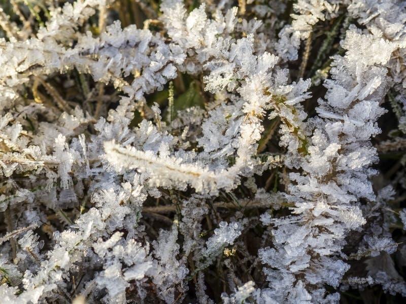 Κατεψυγμένο γρασίδι καλυμμένο με κρυστάλλους πάγου μετά τον παγετό στοκ φωτογραφία