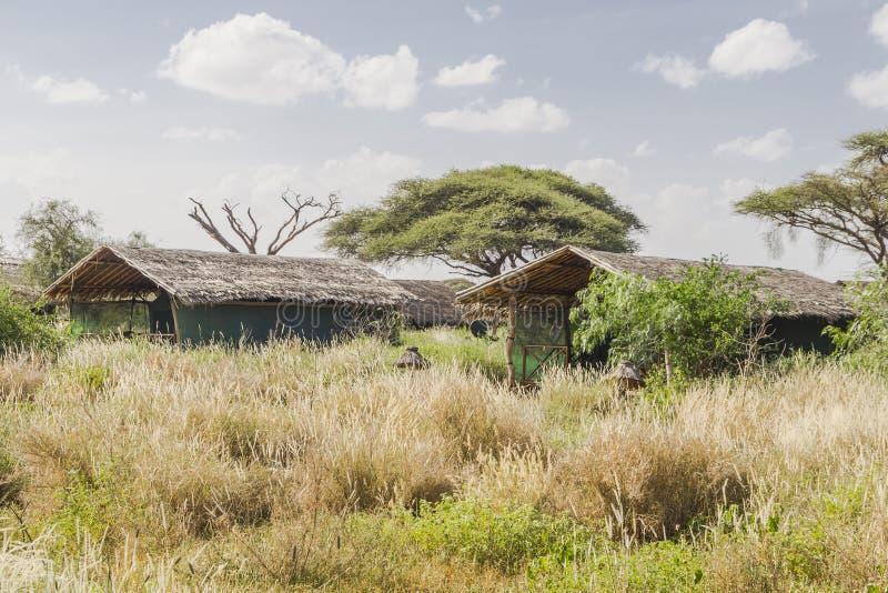 Κατοικήστε στην Κένυα στοκ εικόνα