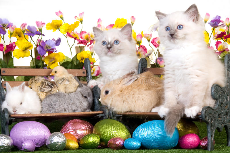 Download Κατοικίδια ζώα με τα αυγά Πάσχας στην άσπρη ανασκόπηση Στοκ Εικόνα - εικόνα από αυγά, κοτόπουλα: 13176749