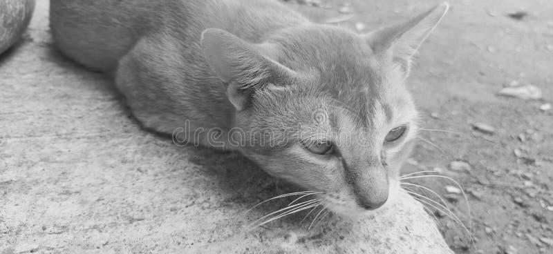 κατοικίδιο ζώο γατακιών στοκ εικόνα με δικαίωμα ελεύθερης χρήσης