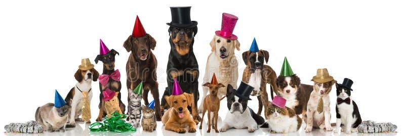 Κατοικίδια ζώα κόμματος στοκ εικόνα