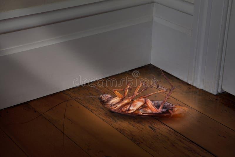 κατσαρίδα νεκρή στοκ εικόνα